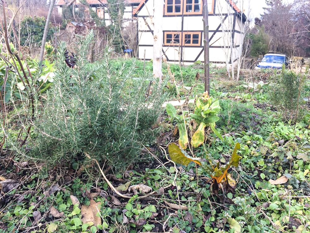 Workshop: Mehrjährige Gemüse unter Obstbäumen @ Wurzelwerk Pieschen