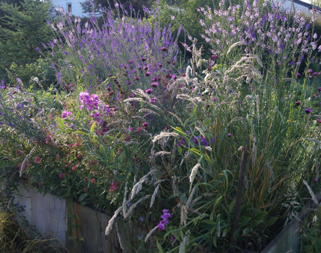 Kleine Wildnis in der Stadt – dauerhafte und schöne Wildblumenbeete anlegen @ Wurzelwerk Pieschen