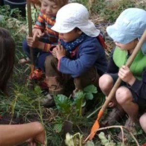 Test Junges Gemüse