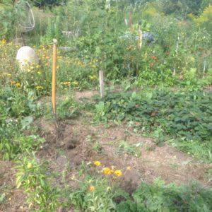 Sich im Kreis drehen – Stoffkreisläufe im Garten