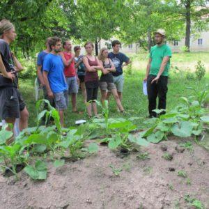 Übung macht den Meister II – Volkers Gartentipps zur Winterbepflanzung