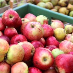 Einfach mal die Presse halten – Äpfel bestimmen, saften & verarbeiten