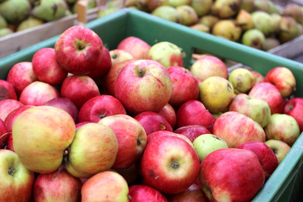 Einfach mal die Presse halten – Äpfel bestimmen, saften & verarbeiten @ Koko in der Alten Gärtnerei